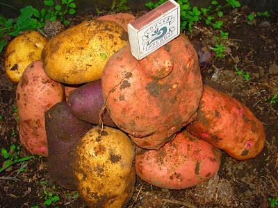 Нажмите на изображение для увеличения.  Название:картошка.jpeg Просмотров:177 Размер:110.1 Кб ID:8829