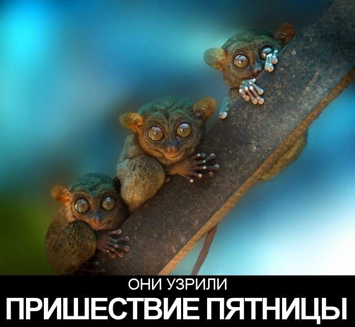 Название: imageBGFQP8W9.jpg Просмотров: 488  Размер: 68.1 Кб